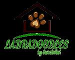 Labradoodle Breeders Ontario